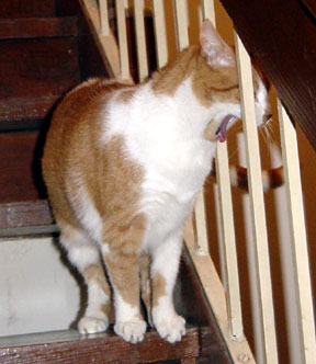Gracie yawning on staircase