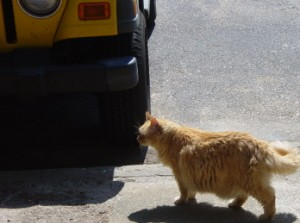 Tig thinking about heading under my Jeep